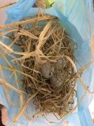 Eier-Transport in Sri Lanka. Ein kleines Nest.